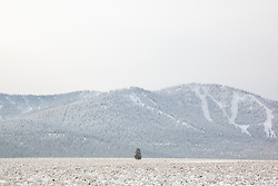 """Snowy Martis Valley 3"" - Photograph of a lone tree in a snow covered Martis Valley in Truckee, California. Northstar Ski Resort can be seen in the background."