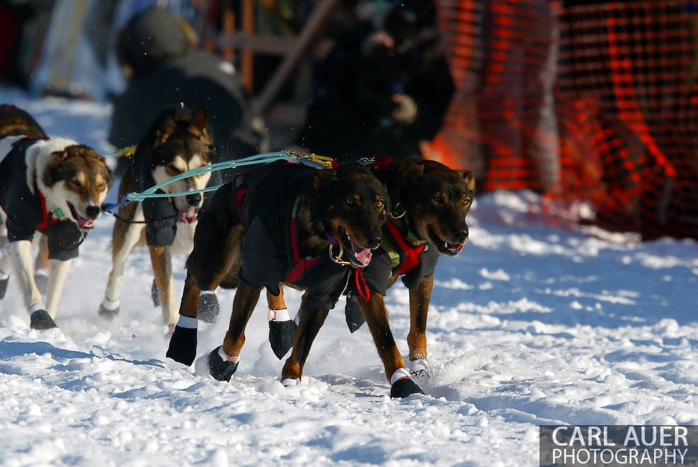 3/4/2007:  Willow, Alaska -  The lead dogs of Rookie Dan Huttunen of Wasilla, AK head out in the 35th Iditarod Sled Dog Race
