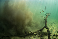 """Bad visibility in a river system in Bonito, Mato Grosso Sul, Brazil. The current in the river interacted with this fallen tree branch and kicked up the silt on the bottom. Photographed while filming Tales by Light, Season 2, Episode 3, """"Misunderstood Predators"""", for Netflix and National Geographic Australia. August, 2016."""
