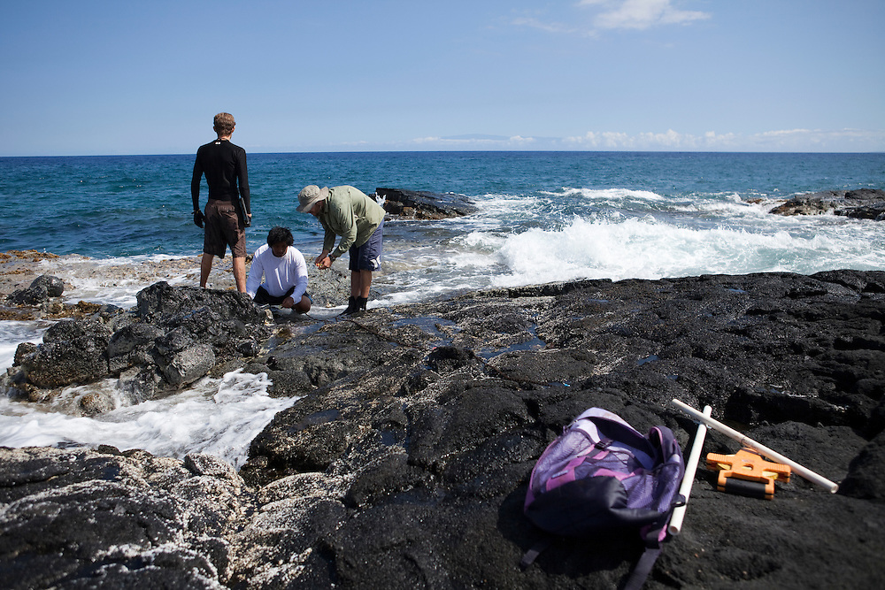 Intertidal surveys at Kalaemano, Kaupulehu, North Kona - pictured, Matt Iacchei and studentsBig Island, Hawaii, `opihi survey
