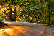 Sunset shadows on SE Salmon Way, Mount Tabor Park, Portland, Oregon, USA.