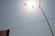 Two doves fly up towards the sky. Khot Iji, Pakistan