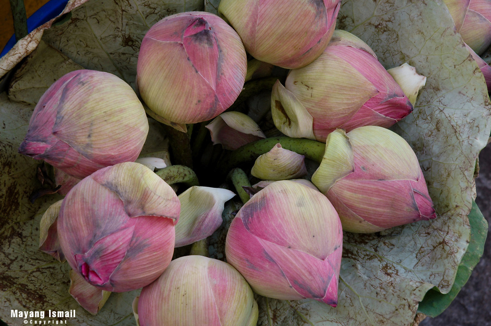 Lotus buds sold at a grocer in Little India, Singapore