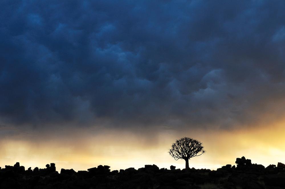 Kocherbaum, Quiver Tree, Giant Rocks area at sunset, near Quiver Tree Restcamp, Keetmanshoop, Karas Region, Namibia