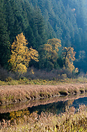 Autumn foliage along the edge of Katzie Marsh at the Pitt-Addington Wildlife Management Area in Pitt Meadows, British Columbia, Canada