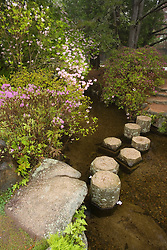 Asticou Azalea Gardens in Northeast Harbor, Maine.  Near Acadia National Park on Mt. Desert Island.