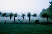 early morning blurry Dutch landscape view