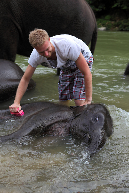 Tourist washing a baby elephant in the river at Tangkahan on the edge of Gunung Leuser National Park.