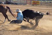 Steer Wrestling, Salinas Rodeo, Rodeo, Salinas, California