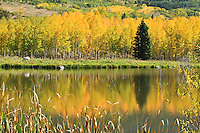 Tree reflections in a small lake along the road to Silver Jack Reservoir.  Colorado, USA.