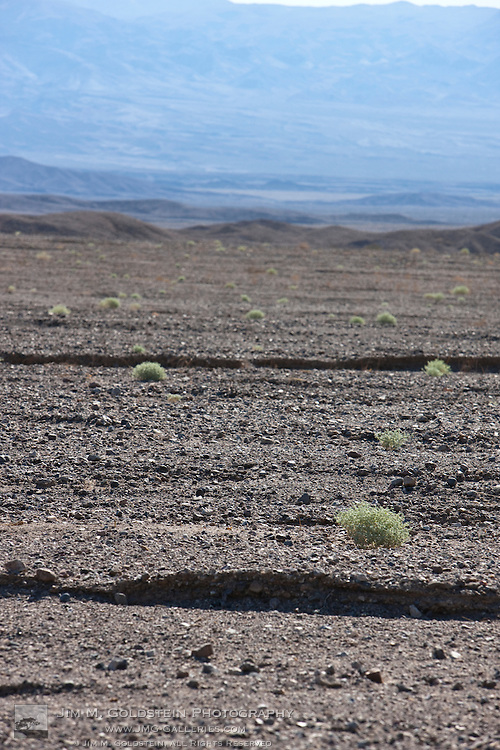 Green plants sparsely spread out across the rocky open expanse of Death Valley National Park, California