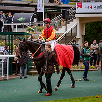 Sundriver (A. Zuliani) wins 117ème Prix de France Challenge de l'Obstacle Gras Savoye - Hipcover Steeple Chase - Cavaliers & Gentelamn Riders, Auteuil, France 04/11/2017, photo: Zuzanna Lupa