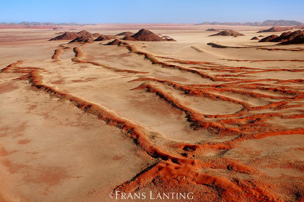 Vegetated sand dunes, NamibRand Nature Reserve, Namibia