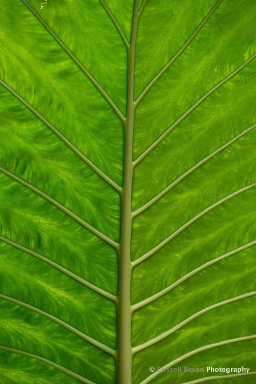 A detail shot of a backlit jungle leaf in Iguazu.
