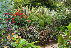 The exotic garden at Great Dixter. Planting includes Begonia 'Little Brother Montgomery', Begonia luxurians, Phormium 'Sundowner', Dahlia 'Wittemans Superba' and Verbena bonariensis