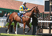 Jockey Noel Garbutt on Norman's Star in the Parade Ring before the 2.50 race at Brighton Racecourse, Brighton & Hove, United Kingdom on 10 June 2015. Photo by Bennett Dean.