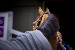 Maikel Van Der Vleuten's, (NED), Verdi NOP waiting to be loaded into the flying stall<br /> Departure of the horses to the World Cup Finals in Las Vegas from Schiphol - Amsterdam 2015.<br />  © Hippo Foto - Dirk Caremans
