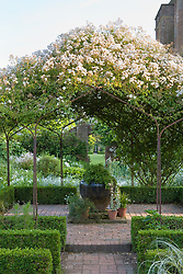 Rosa mulliganii in full flower growing over the pergola in the White Garden at Sissinghurst Castle