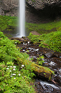 Wild flowers adorn the creek that descends from the base of Latourell Falls, Columbia River Gorge, Oregon
