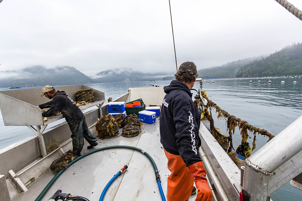 Oyster farming is a constant grind.  You have to work with the tides and seasons to keep up with it.