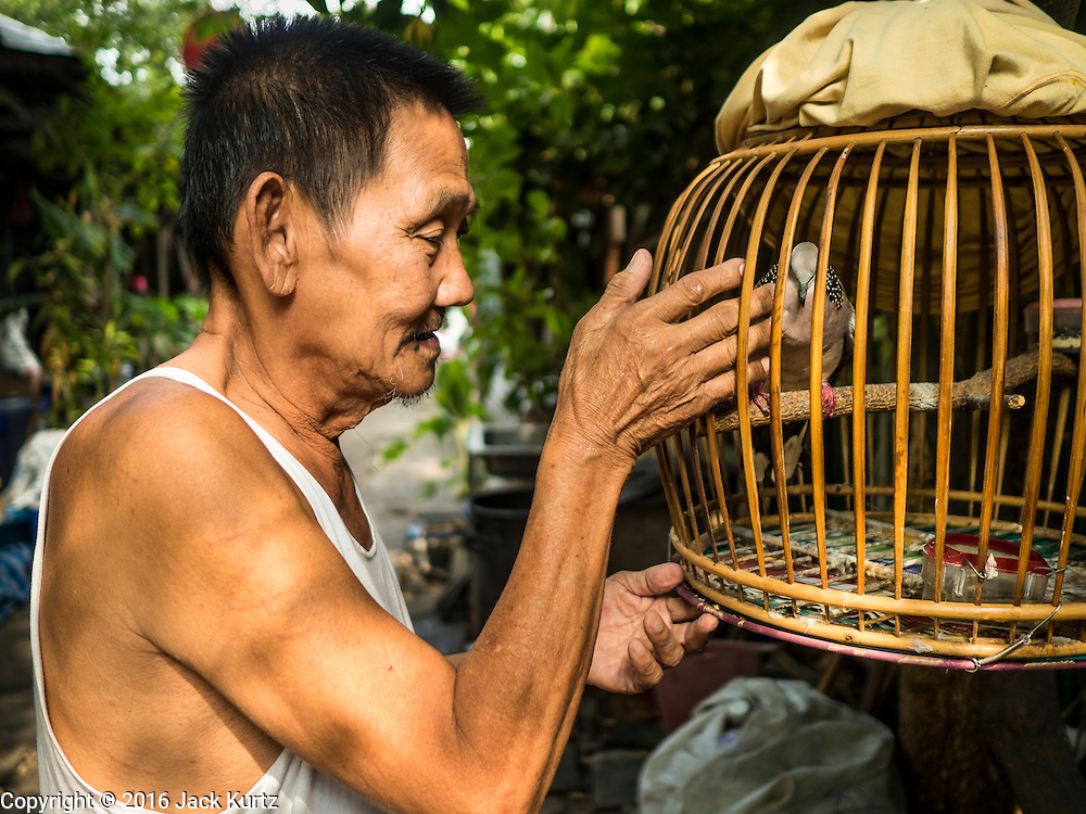 07 APRIL 2016 - BANGKOK, THAILAND: A man with his pet dove in the squatters' community in Mahakan Fort. The community is known for fireworks, fighting cocks and bird cages. Mahakan Fort was built in 1783 during the reign of Siamese King Rama I. It was one of 14 fortresses designed to protect Bangkok from foreign invaders, and only of two remaining, the others have been torn down. A community developed in the fort when people started building houses and moving into it during the reign of King Rama V (1868-1910). The land was expropriated by Bangkok city government in 1992, but the people living in the fort refused to move. In 2004 courts ruled against the residents and said the city could take the land. The final eviction notices were posted last week and the residents given until April 30 to move out. After that their homes, some of which are nearly 200 years old, will be destroyed.       PHOTO BY JACK KURTZ
