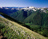 Meadows along the Pacific Crest Trail, Glacier Peak Wilderness Washington USA