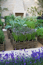 Herbs, including chives, fennel and arctichokes, planted in woven willow raised beds in the Daylesford Organic Summer Solstice Garden. Outdoor fireplace, lavender edging