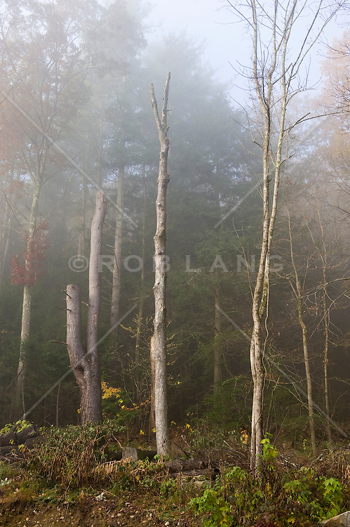 Fog lifting over trees in a wooded area of Connecticut