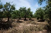 Andria -Oleificio Terre di Traiano