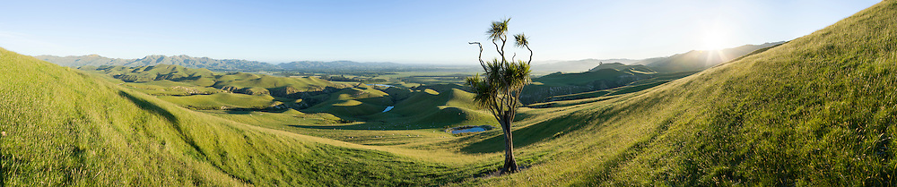 A lone cabbage tree stands in a shallow gully on hill country farmland. The sun is shining in a clear blue sky.