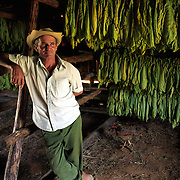 A tobacco farmer in the Piñar del Rio region of Cuba.