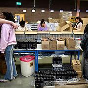 Nederland Rotterdam 11 december 2007 .Werknemers van Roteb Impact stellen kerstpaketten samen en pakken deze in aan de lopende band. Roteb Impact is een sociale werkplaats voor minder validen en geestelijk gehandicapten. ..Roteb heeft banen voor mensen die door psychische, lichamelijke of verstandelijke beperkingen alleen kunnen werken onder aangepaste omstandigheden. Rotterdammers met een handicap en op zoek naar een baan bij Roteb Ultimade, Roteb MultiGroen, Roteb Impact of andere Roteb-onderdelen dienen zich te melden bij het dichtstbijzijnde CWI...Roteb richt zich onder meer op werkgelegenheid, arbeidsintegratie en uitvoering van de Wet sociale werkvoorziening (Wsw). Roteb biedt werk aan mensen die met psychische, lichamelijke of verstandelijke beperkingen alleen kunnen werken onder aangepast omstandigheden. Daarnaast biedt Roteb leerwerkplaatsen voor andere doelgroepen met een afstand tot de arbeidsmarkt om ze meer kans te bieden op een reguliere baan..Roteb biedt in de 4 werkbedrijven, Impact, Montaz, Ultimade en MultiGroen aangepast werk. Daarnaast werken medewerkers individueel gedetacheerd of in een werkunit op locatie bij de klant. Als het nodig is begeleidt Roteb medewerkers die willen en kunnen uitstromen naar de reguliere arbeidsmarkt..Voor zover mogelijk sluit Roteb de mogelijkheden van arbeidsgehandicapten en de vragen op de reguliere arbeidsmarkt op elkaar aan. Daardoor vinden mensen met een lichamelijke, verstandelijke of psychische beperking werk dat bij hen past. We onderhouden intensieve contacten met verwijzende instellingen, belangenorganisaties en praktijkscholen. Onze werkbedrijven hebben veel zakelijke relaties in de markten en springen in op nieuwe mogelijkheden. Zij vernieuwen hun diensten en producten in samenspraak met hun partners..Roteb divisie multibedrijven is de nieuwe naam voor de werkzaamheden van Multibedrijven en Inderdaad..Multibedrijven is een divisie van de dienst Roteb gericht op werkgelegenheid, arbeidsintegratie en uitvoer