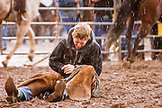 "30 JULY 2005 - WILLIAMS, ARIZONA, USA: A cowboy holds his wrist after being thrown during the bronc riding at the Arizona Cowpunchers' Reunion Rodeo, the largest amateur rodeo in Arizona, in Williams, AZ, July 30. Professional rodeo cowboys cannot participate in the rodeo. Only working ranch cowboys and their families can participate in the rodeo, which features sports more geared to ranch life, like ""wild cow milking"" than pro rodeos, which feature bull riding. Williams, a small ranching town in northern Arizona and about an hour from the south entrance to the Grand Canyon National Park, has reinvented itself as a tourist destination. The town draws tourists going to the park and tourists who want to experience American western lifestyle. The town hosts the largest amateur rodeo in Arizona drawing contestants and spectators from across the state. PHOTO BY JACK KURTZ"