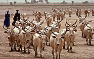 Africa Livestock