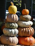 Halloween decorations in Nashville TN