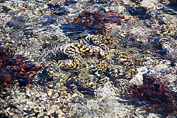 Marine life on top of Montgomery Reef.  At 292km2, Montgomery is Australia's largest inshore reef.