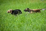"""Eventfotografie mit  """"Stella von Trebur"""" i. Für Stella ist jeder Spaziergang ein Event und für mich war der Hundeevent eine besondere Erfahrung."""