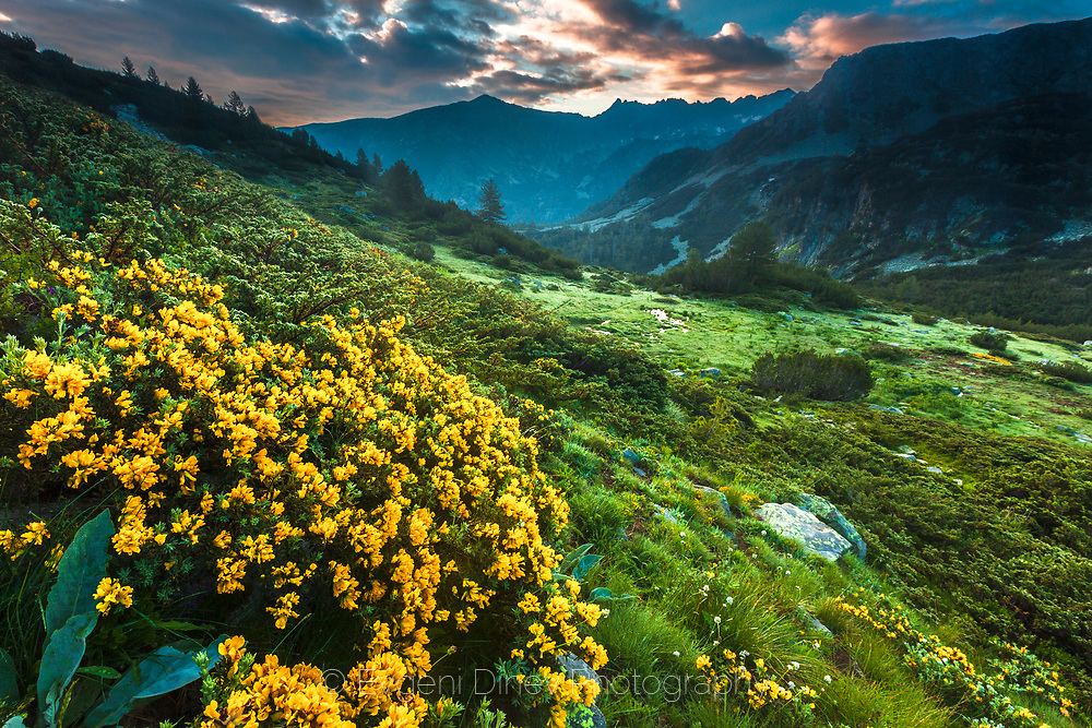 Green mountain valley with yellow flowers
