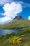Stac Pollaidh, Stack Polly, mountain, loch and wild gorse within Inverpolly National Nature Reserve in Coigach region of the Scottish Highlands