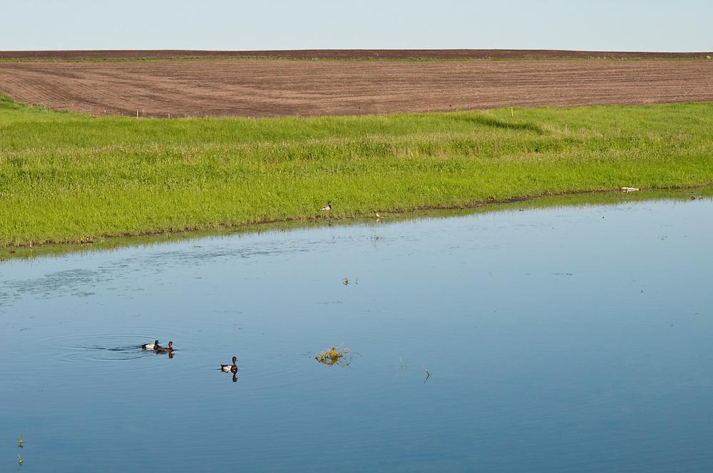 Prairie pothole and waterfowl, McPherson County, South Dakota