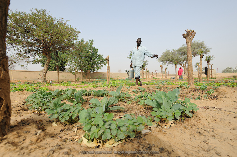 Community Health Worker, Lawali Issou, tends to vegetables grown as part of a Save the Children garden program at an Integrated Health Centre in Guiindaoua in the Tessaoua region of Niger.