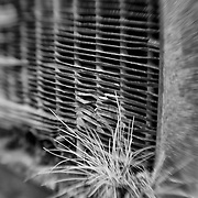 Grass Sprouts And Old Car Radiator - Pottsville - Merlin, Oregon - Lensbaby - Black & White