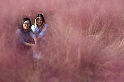 October 8, 2018 - Huai'an, China - Two girls sit in Pink hairawn muhly blossoms at Baima Lake Forest Park. (Credit Image: © SIPA Asia via ZUMA Wire)