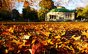 Autumn leaves with the Statuary Pavilion in the background at Ballarat Botanical Gardens<br />