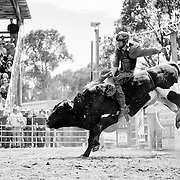 A bull rider gets shouts of encouragement from a cowboy on the gate.<br /> Augusta Rodeo 2011.