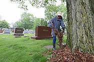 Sharon Wrigel of Atkins spreads mulch around trees during the annual Join Hands Day at the Czech National Cemetery, 2200 C St SW in Cedar Rapids on Saturday morning, May 5, 2012. The Join Hands Day was organized by local CSA Fraternal Life and WFLA lodges. (Stephen Mally/Freelance)