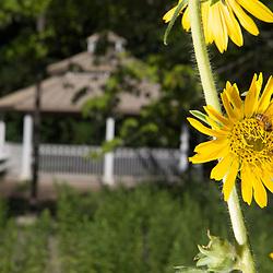 Campus scenics- Gardens