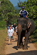 Elephant camp near Ban Khlong Son. Tourists walking behind.