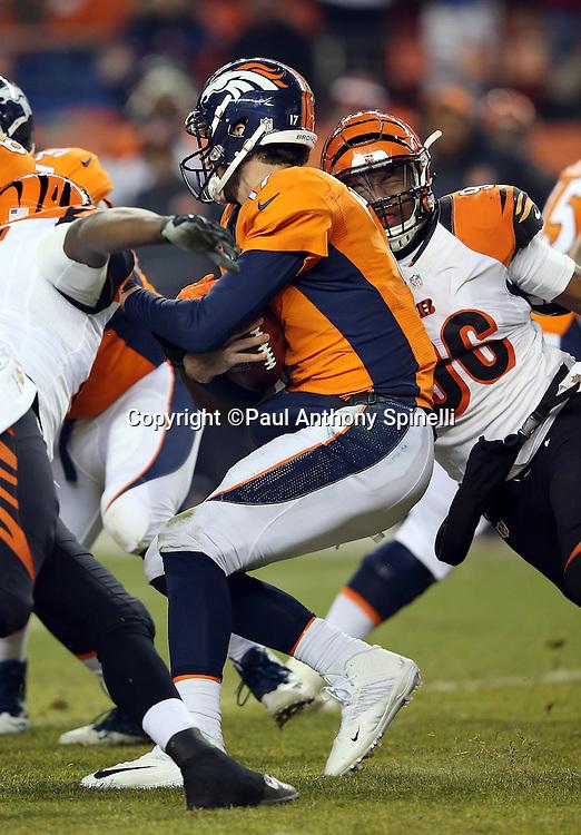 Cincinnati Bengals defensive end Carlos Dunlap (96) sacks Denver Broncos quarterback Brock Osweiler (17) for a loss of 6 yards in the third quarter during the 2015 NFL week 16 regular season football game against the Denver Broncos on Monday, Dec. 28, 2015 in Denver. The Broncos won the game in overtime 20-17. (©Paul Anthony Spinelli)