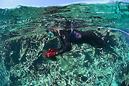 Dominican fishermen fishing within the boundaries of the Silver Banks Marine Park, Dominican Republic, Caribbean Sea